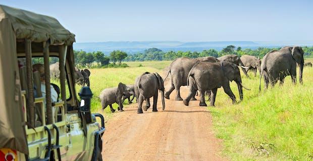 Zimbabwe Plains Game Safari and Church Build